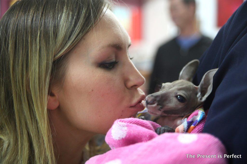 Kangoroo kissing