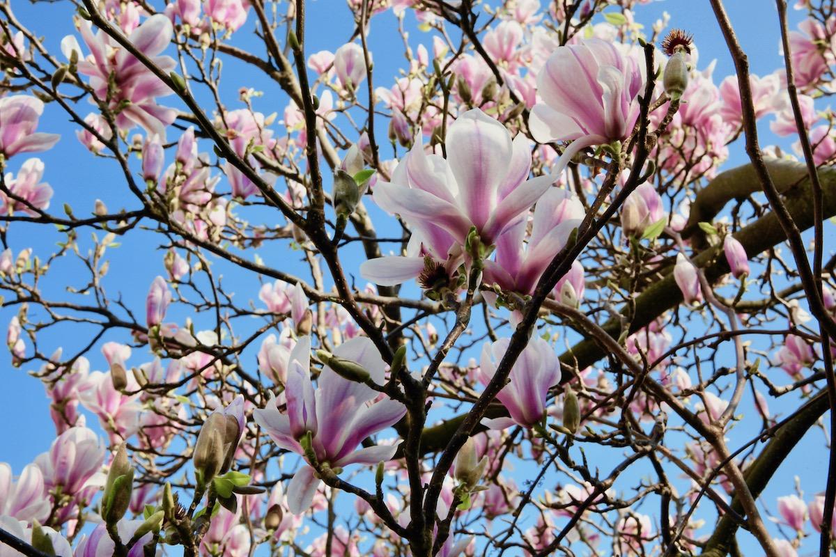 Korona kevät