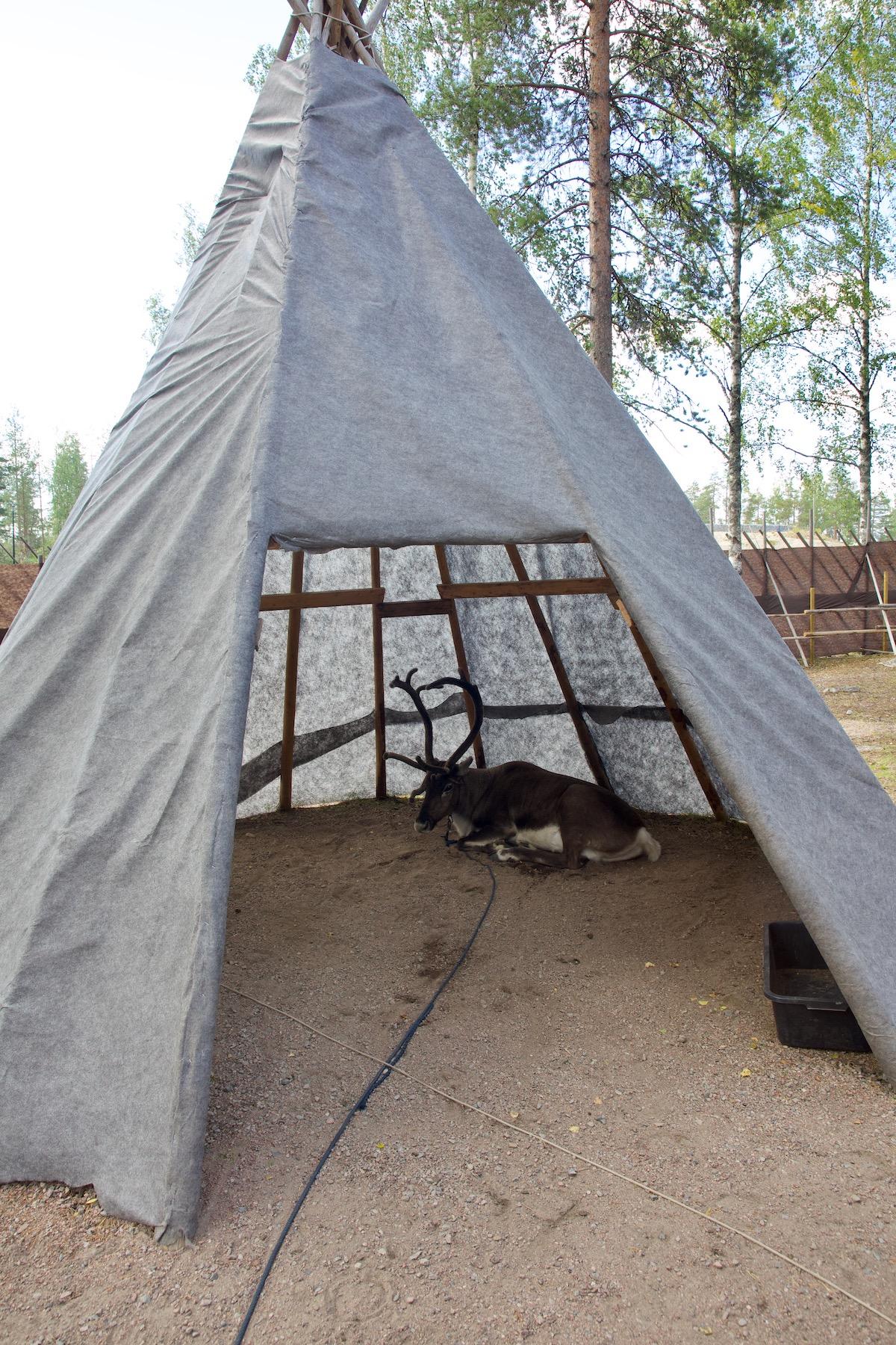 reindeer hut